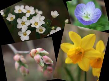 flower0316.jpg