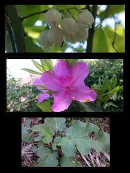 garden0419.jpg
